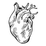 Human heart black line, tattoo. Vector illustration. Human heart black line, tattoo, organ Vector illustration Stock Images