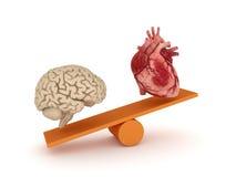 Human heart and brain. Stock Photo