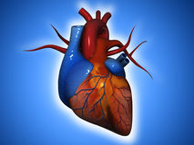 Human heart. Can be used in business,medical, personal, charitable and educational design projects: it may be used in web design, printed media, advertising Stock Photography
