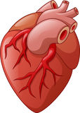 Human heart cartoon illustration Stock Photography