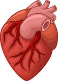 Human heart cartoon illustration Royalty Free Stock Image