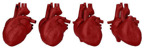 Human heart concept Stock Image