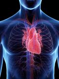 The human heart. 3d rendered medically accurate illustration of the human heart royalty free illustration