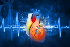 Human heart. Digital illustration of Human heart Royalty Free Stock Photo