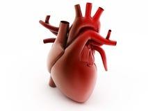 Human heart stock illustration