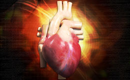 Human heart. Digital illustration of human heart in colour background stock photos