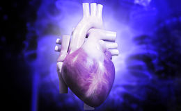 Human heart. Digital illustration of a human heart in colour background royalty free stock photography