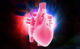 Human heart. Digital illustration of a human heart in colour background stock image