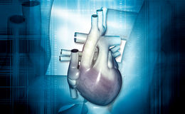 Human heart. Digital illustration of a human heart in colour background royalty free stock photos