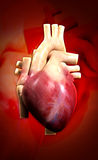 Human heart. Digital illustration of a human heart in colour background stock images