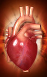 Human heart. Digital illustration of a human heart in white background stock image