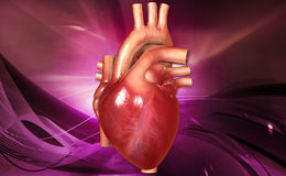Human heart. Digital illustration of a human heart in white background royalty free stock photos
