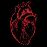 Human Heart Drawing. Line work Vector for use Stock Image