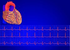 Human heart& Electrocardiogram 3 Royalty Free Stock Photos