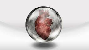 Human heart in glass Stock Image
