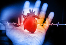 Human Heart  in hand Stock Photo