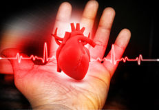 Human Heart  in hand Royalty Free Stock Photos