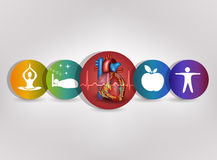 Human heart health care colorful icon collection Royalty Free Stock Photography
