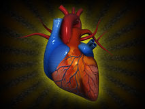 """Human Heart. """"Human Heart"""", can be used in business, personal, charitable and educational design projects: it may be used in web design, printed media Royalty Free Stock Photography"""