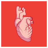 Human heart illustration on red background Stock Photos