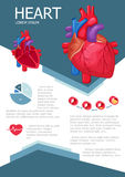 Human heart infographic. Poster with chart, diagram and icon. The process of atherosclerosis. Heart anatomy medical science infographic with chart, diagram Stock Image