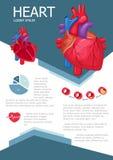 Human heart infographic Stock Image