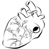 Human Heart Ink Drawing Royalty Free Stock Images