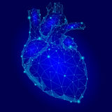 Human Heart Internal Organ Triangle Low Poly. Connected dots blue color technology 3d model medicine healthy body part  illu Stock Photos