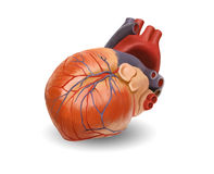 Human heart - keep path Stock Image