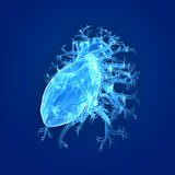 Human Heart Lateral view Stock Photos