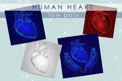 Human heart low poly medicine science illustration set. Internal organ anatomical pain cure concept. Help heart holding Stock Photography