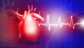 Human heart. On medical background Royalty Free Stock Image