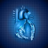 Human heart medical illustration Stock Images