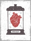 Human heart in a medical jar vector illustration. Royalty Free Stock Images