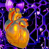 Human heart model Stock Photo
