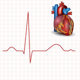 Human heart normal rhythm and heart anatomy Stock Photo