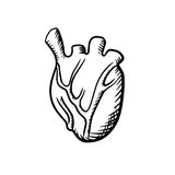 Human heart in sketch style Royalty Free Stock Photos