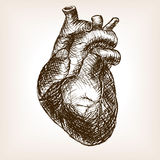 Human heart sketch style vector illustration Royalty Free Stock Images