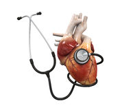 Human Heart and Stethoscope Royalty Free Stock Images