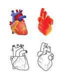 Human heart vector set isolated on white background. Stock Photos