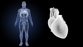 Human Heart zoom with anatomy anterior view Stock Images