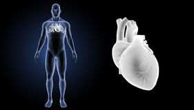Human Heart zoom with body anterior view Stock Photography