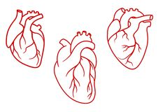 Human hearts icons in outline style. Red human hearts in outline style with aorta, veins and arteries isolated on white background. For cardiology or medical Royalty Free Stock Image