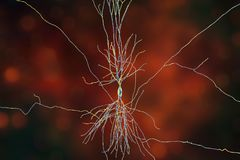 Human hippocampus neuron, computer reconstruction. 3D illustration. Damage of hippocampus is involved in development of Alzheimer`s disease, other form of stock photo