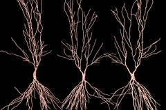 Human hippocampus neurons, computer reconstruction. 3D illustration. Damage of hippocampus is involved in development of Alzheimer`s disease, other form of Stock Photography