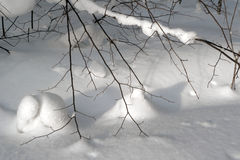 The snow hare hid under branches. On fluffy snow Stock Images