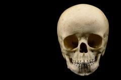 Human infant skull Stock Photos