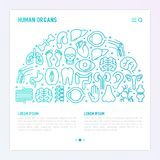 Human internal organs concept in half circle. With thin line icons. Vector illustration for banner, web page, print media Stock Images