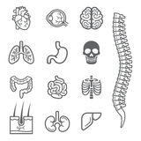 Human internal organs detailed icons set. Stock Photo