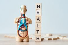 Human internal organs dummy and word health made of wooden blocks on a white background with copy space royalty free stock photo
